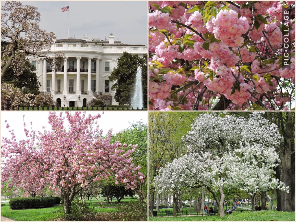 Spring in Washington