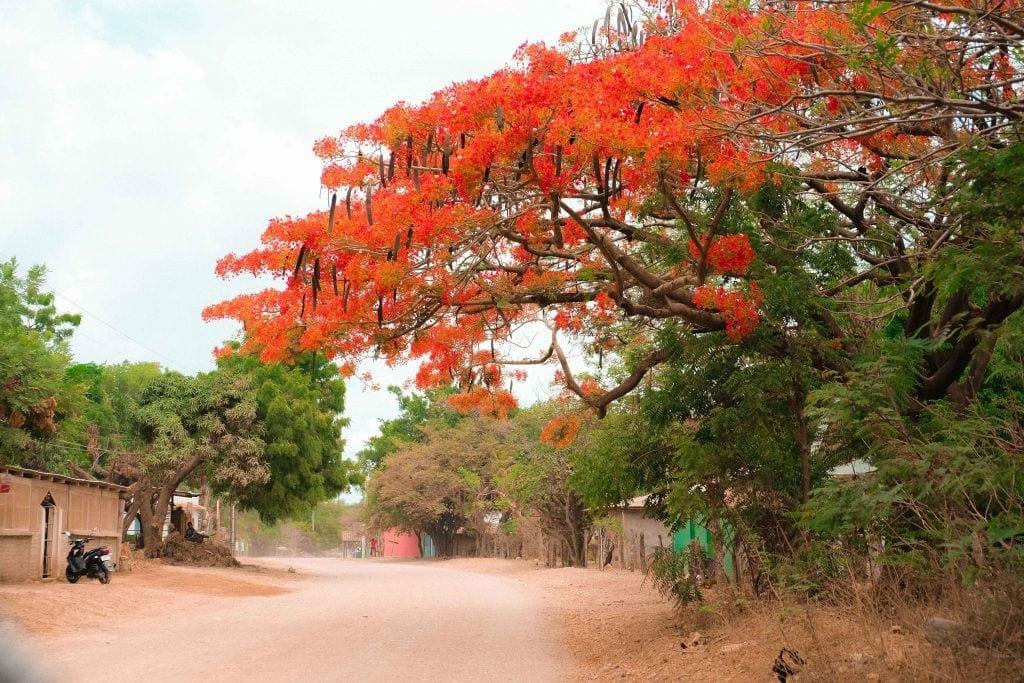 Natureza da Nicaragua