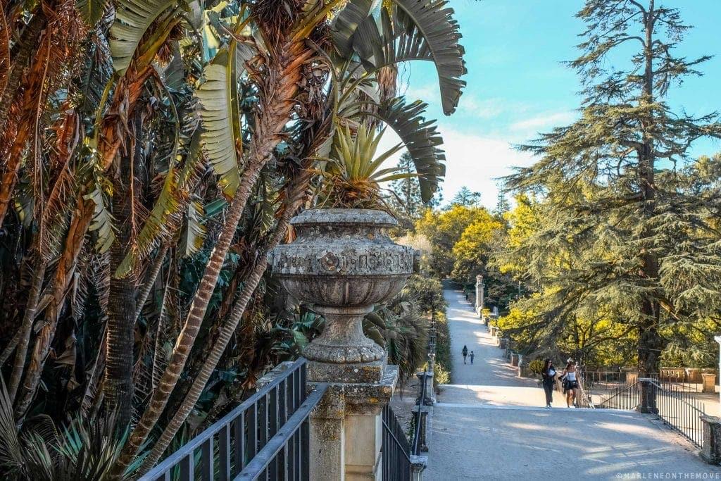 Jardim Botânico | Botanical Garden