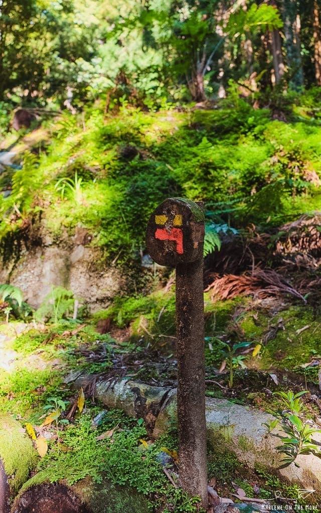 Açores Parque Grená Park Furnas São Miguel Azores