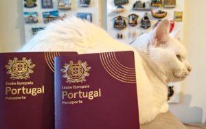 Gato Vadio blog de viagens