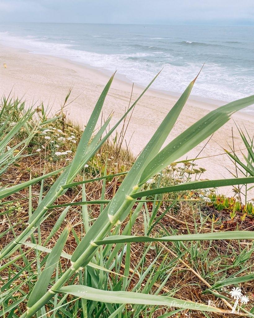 Praia da Légua Beach Nazaré Portugal