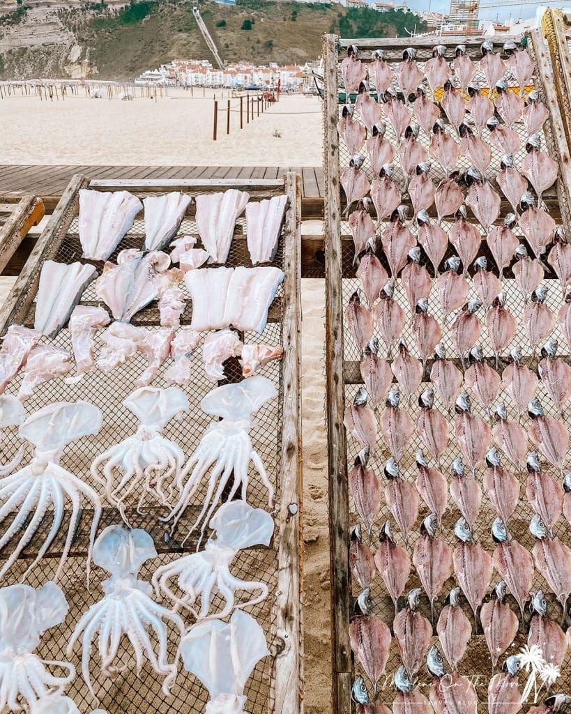 Estendais com peixe Nazaré Portugal