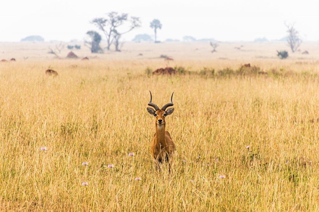 africa savana africana